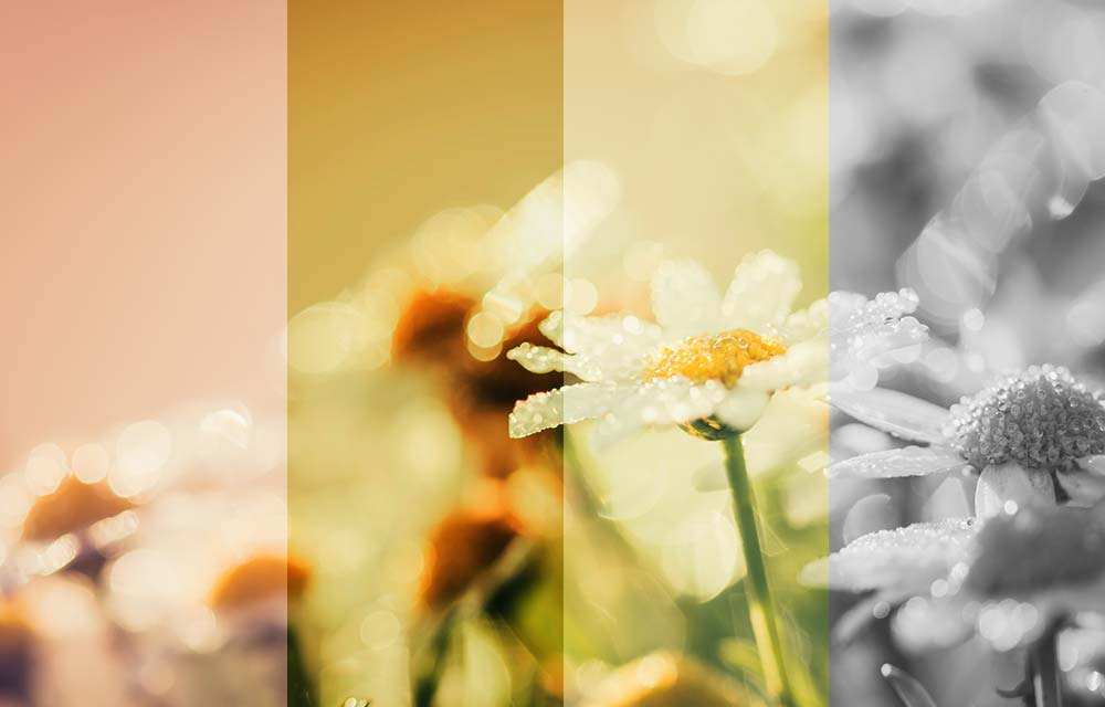 Flower meadow with different photo effects, which were created with the picture editor of the Designer website builder.